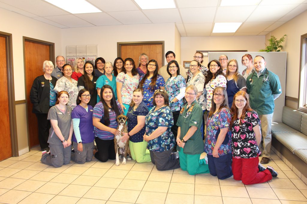 Farmington veterinary team